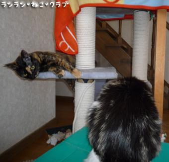 20081223cocomaro1.jpg