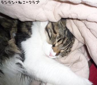 20081224maron1.jpg