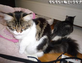 20081226guremaro1.jpg