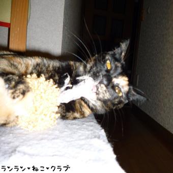 20081227cocoa3.jpg