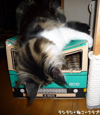 20081229cocomaro3.jpg