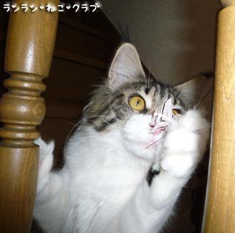 20090109maron6.jpg