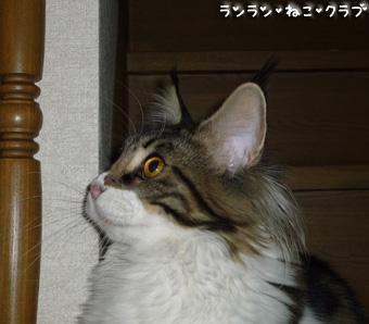 20090112maron1.jpg