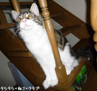 20090114maron6.jpg