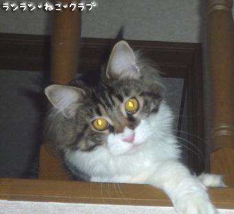 20090120maron1.jpg