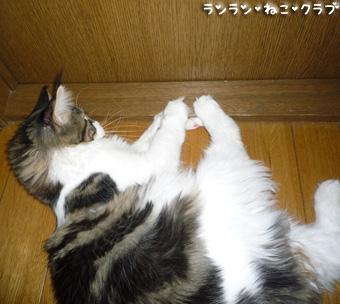 20090124cocomaro4.jpg
