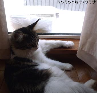 20090130maron1.jpg