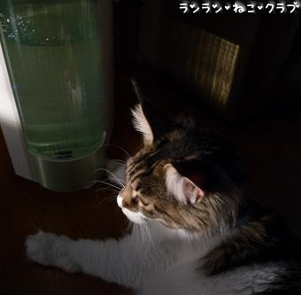 20090203maron3.jpg