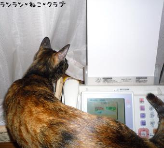 20090207cocoa2.jpg