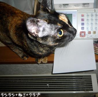 20090207cocoa3.jpg