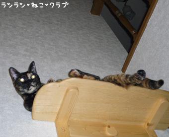 20090209cocomaro2.jpg