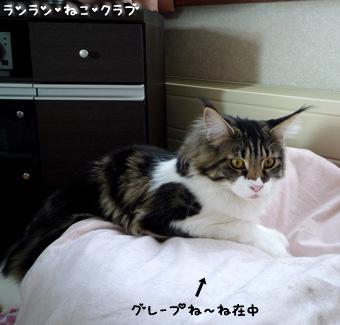 20090224maron1.jpg