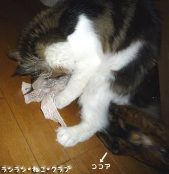 20090324cocomaro1.jpg