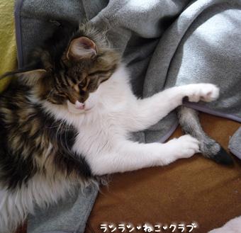 20090407guremaro7.jpg