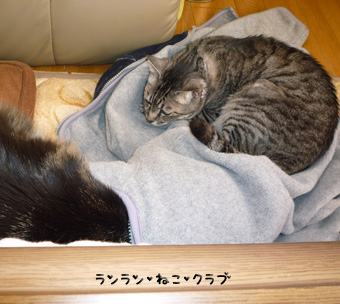 20090409guremaro2.jpg
