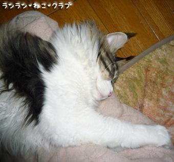 20090413maron1.jpg