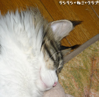 20090413maron1_1.jpg