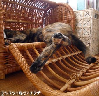 20090416cocomaro2.jpg