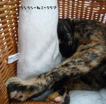 20090416cocomaro3.jpg