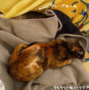 20090504gurecoco1.jpg