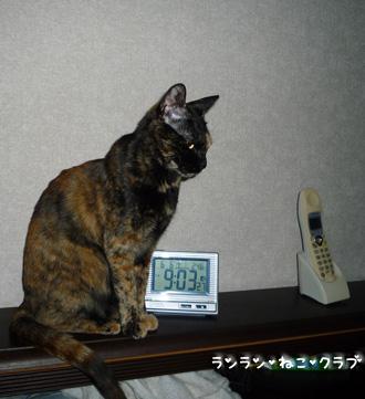 20090615cocoa1.jpg
