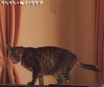 20090710gure1.jpg