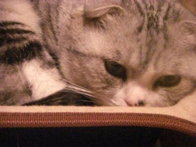 ふて寝のネコ