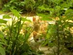 子猫の巣v