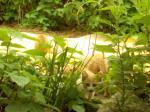 子猫の巣②v