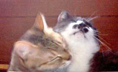 ジャック&シマ