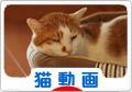 にほんブログ村 猫ブログ 猫動画へ