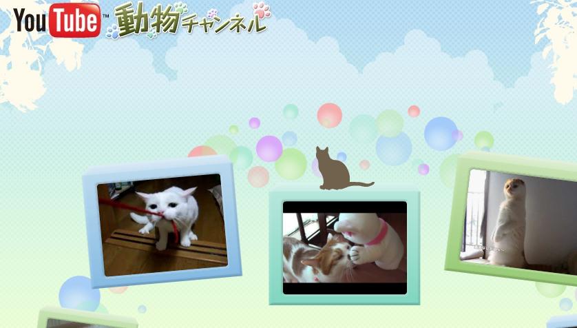 YouTubeアニマルーブログ用_edited-1
