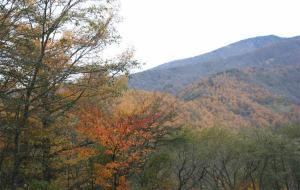 八ヶ岳高原ラインⅢ