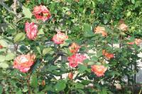 English garden②