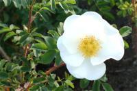English garden④