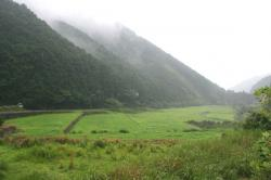 雨のツヅラド1