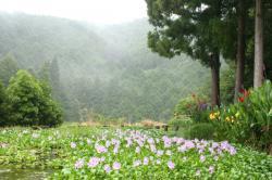 雨のツヅラド2