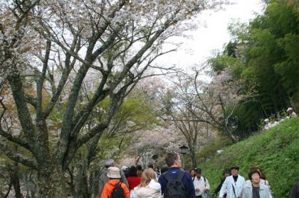 吉野千本桜3