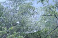 くもの巣もダイナミック