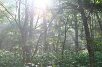 林も朝に・・