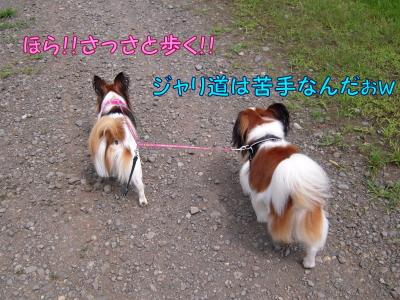 200808126.jpg