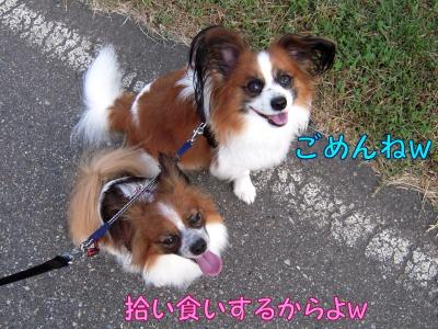 200808251.jpg