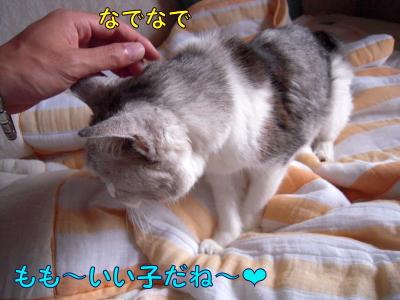 200810145.jpg