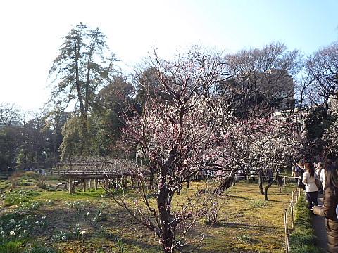 koishikazs02.jpg