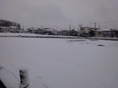 matayukis01.jpg
