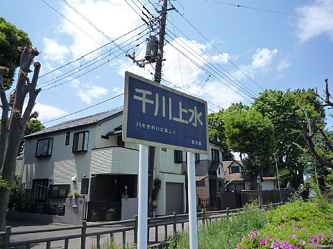 senkawasa03.jpg
