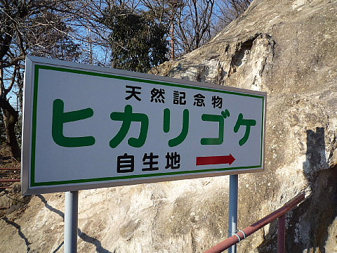 yoshimiz8.jpg