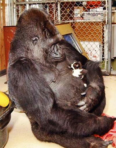7-greatest-apes.jpg