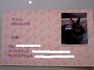 マフィンちゃん名刺