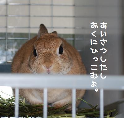 DSC_0557702.jpg